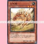 SHSP-JP043 : Tsuchinoko (Common)